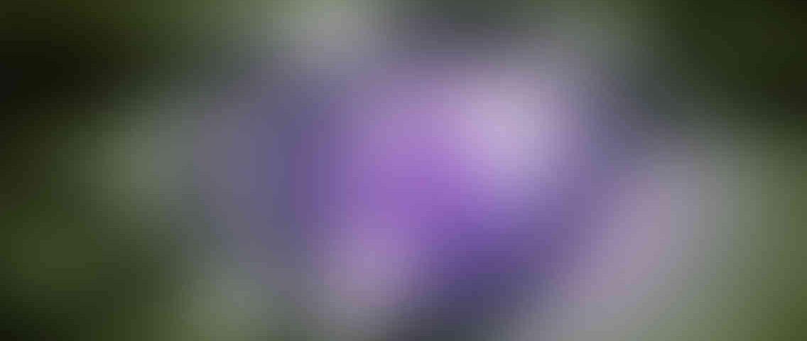 https://numeric.si/wp-content/uploads/2013/03/standout_slide_3_v01-1136x480.jpg